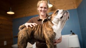grooming 1 canis resort
