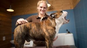 grooming 3 canis resort