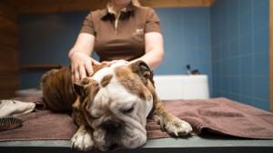 grooming 9 canis resort