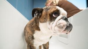 grooming baden 1 canis resort