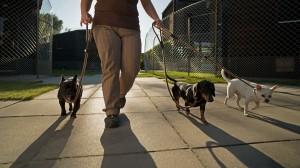 lodge aussen spaz 3 canis resort