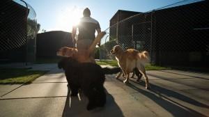 lodge aussen spaz 8 canis resort