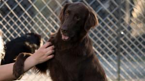 lodge garten 14 canis resort