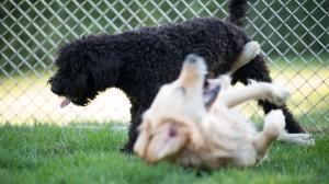 lodge garten 16 canis resort