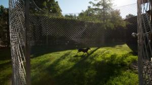 lodge garten 9 canis resort